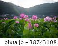 臼杵市 蓮 花の写真 38743108