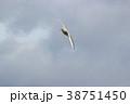 ユリカモメ (百合鴎) その19。 Black headed gull 38751450