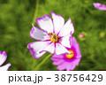 韓国 風景 屋外の写真 38756429