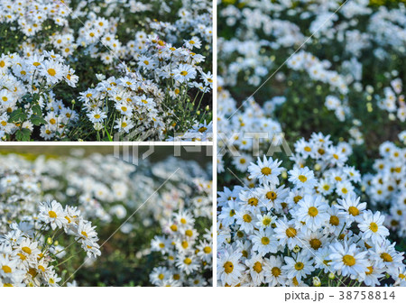 Abstract background of white flowers 38758814