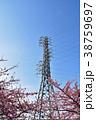 河津桜 青空 鉄塔の写真 38759697
