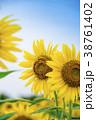 夏 花 ひまわりの写真 38761402