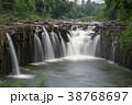 すがすがしさ 熱帯雨林 森林の写真 38768697