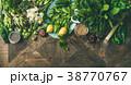 材料 食材 野菜の写真 38770767