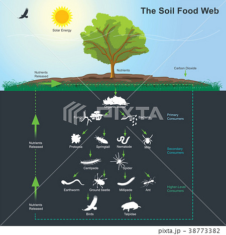 The Soil Food Web diagram. Illustration. 38773382