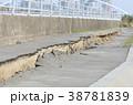 東日本大震災の被害 38781839
