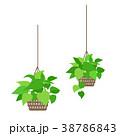 観葉植物のイラスト。 38786843