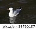 鳥 野鳥 カモメの写真 38790157
