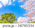 【山梨県】桜の木 38795334