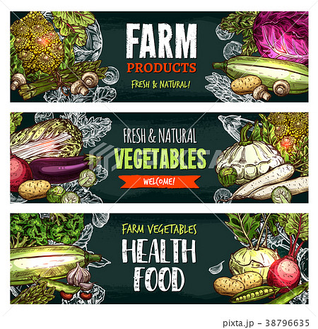 Vector fresh organic vegetables sketch banners 38796635