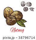 ナツメグ スパイス 調味料のイラスト 38796714