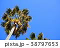 椰子の木と青空 38797653