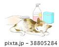 イラスト 挿絵 動物のイラスト 38805284