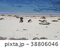 アメリカ合衆国カリフォルニア州サンディエゴのラホヤの海岸のアザラシの群れ 38806046
