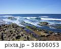 アメリカ合衆国カリフォルニア州サンディエゴのラホヤの海岸のアザラシの群れ 38806053
