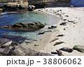 アメリカ合衆国カリフォルニア州サンディエゴのラホヤの海岸のアザラシの群れ 38806062