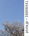 風に散る梅の花 38806441