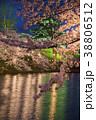 桜 ライトアップ 花の写真 38806512