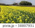 菜の花 春 早春の写真 38807931