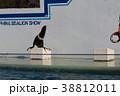 アシカショー・しながわ水族館 38812011