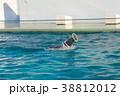 アシカショー・しながわ水族館 38812012
