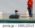 アシカショー・しながわ水族館 38812013