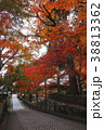 11月秋 紅葉の永源寺 滋賀の秋景色 38813362