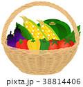 野菜 夏野菜 籠のイラスト 38814406