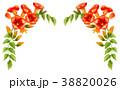 凌霄花 花 植物のイラスト 38820026