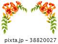 凌霄花 花 植物のイラスト 38820027