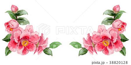 水彩で描いたピンクの山茶花の下部フレーム素材 38820128