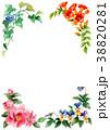 植物 凌霄花 パンジーのイラスト 38820281