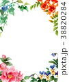 植物 凌霄花 パンジーのイラスト 38820284
