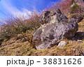 《神奈川県》湯河原梅林・梅の宴 38831626