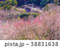 《神奈川県》湯河原梅林・梅の宴 38831638
