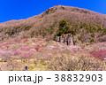 《神奈川県》湯河原梅林・幕岩 38832903