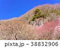《神奈川県》湯河原梅林・幕岩 38832906