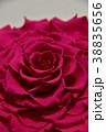 薔薇 プリザーブドフラワー 花の写真 38835656