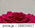薔薇 プリザーブドフラワー 花の写真 38835657