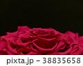 薔薇 プリザーブドフラワー 花の写真 38835658