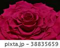 薔薇 プリザーブドフラワー 花の写真 38835659