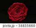 薔薇 プリザーブドフラワー 花の写真 38835660