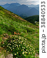 北アルプス 山 高山植物の写真 38840533
