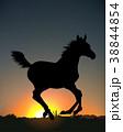 馬 人影 影のイラスト 38844854