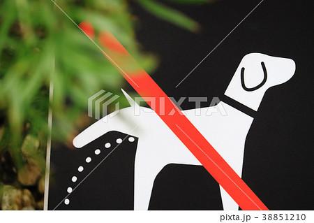 マナーの看板 犬 おしっこ禁止 38851210