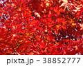 紅葉 もみじ 秋の写真 38852777