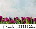 お花 フラワー 花の写真 38856221