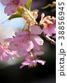 河津桜 花 桜の写真 38856945