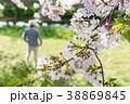 男性 桜 お花見の写真 38869845
