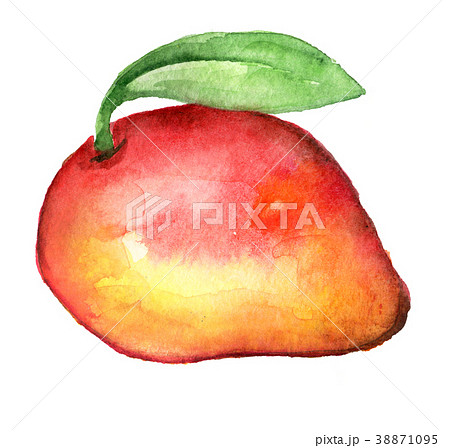 watercolor sketch of mango isolated on white  38871095